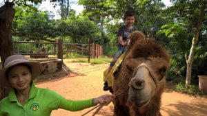 actividades para tus hijos en China