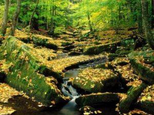 turismo y naturaleza