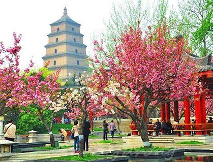 Primavera Xian